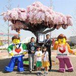 レゴランドの「レゴブロックで作られた最大の桜の木」がギネス認定!